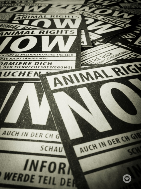 Superpeng Animal Rights Now, Tierrechte, Aktivismus